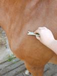 Guasha paard 2